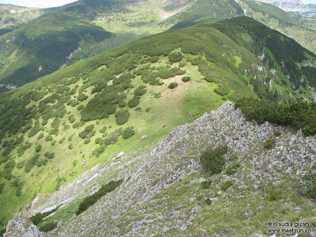 Retezat Trail Race -Şaua Scorota
