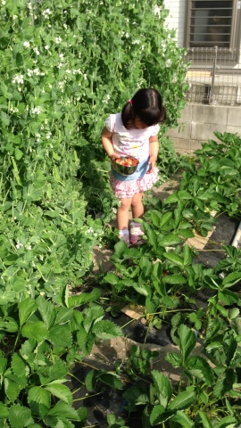 本格的な家庭菜園