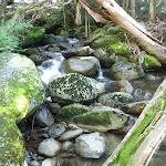 Creek beside Birralee Bushcamp (275168)
