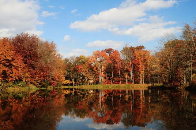 Mùa Thu Oakvill, Virginia