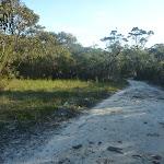 Perimeter Trail near Terrey Hills (307628)