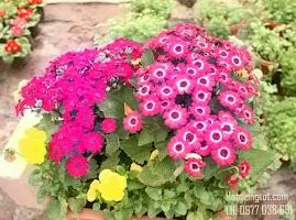 Mua hạt giống hoa chất lượng ở đâu tại Hà Nội