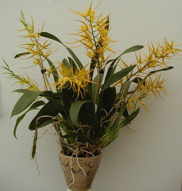 Растения из Тюмени. Краткий обзор Ho015a