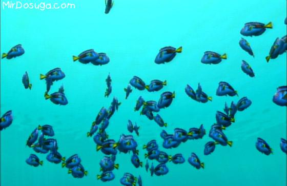 Endless ocean - много рыбок
