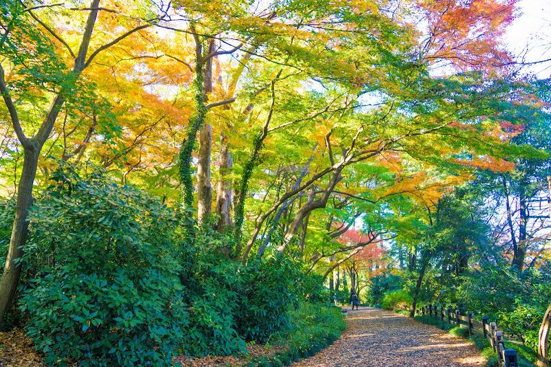 新宿御苑 紅葉 写真22