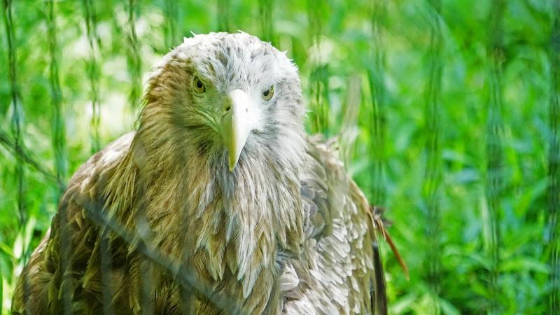 多摩動物公園 フクロウ 写真