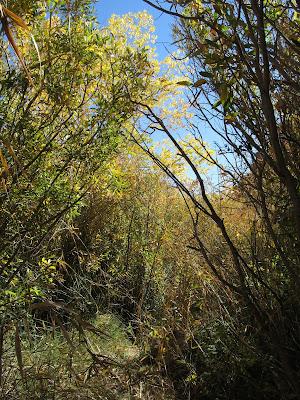 Bushwhack through Spring Canyon