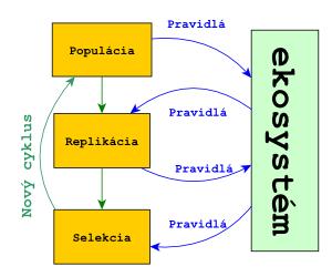 Evolučný cyklus