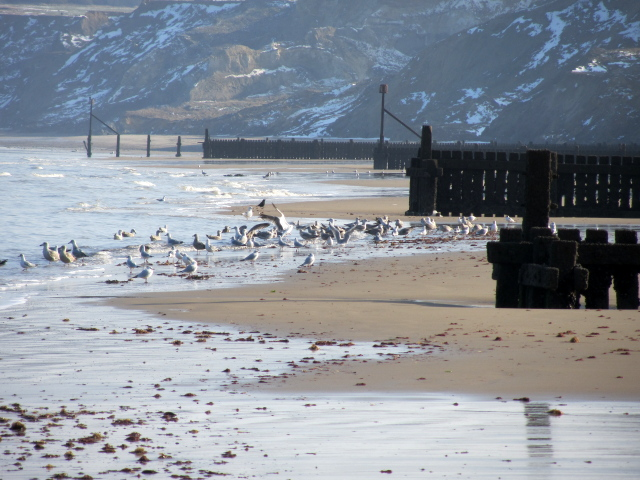 a flock of sea gulls