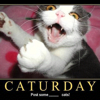 Who is Caturday?