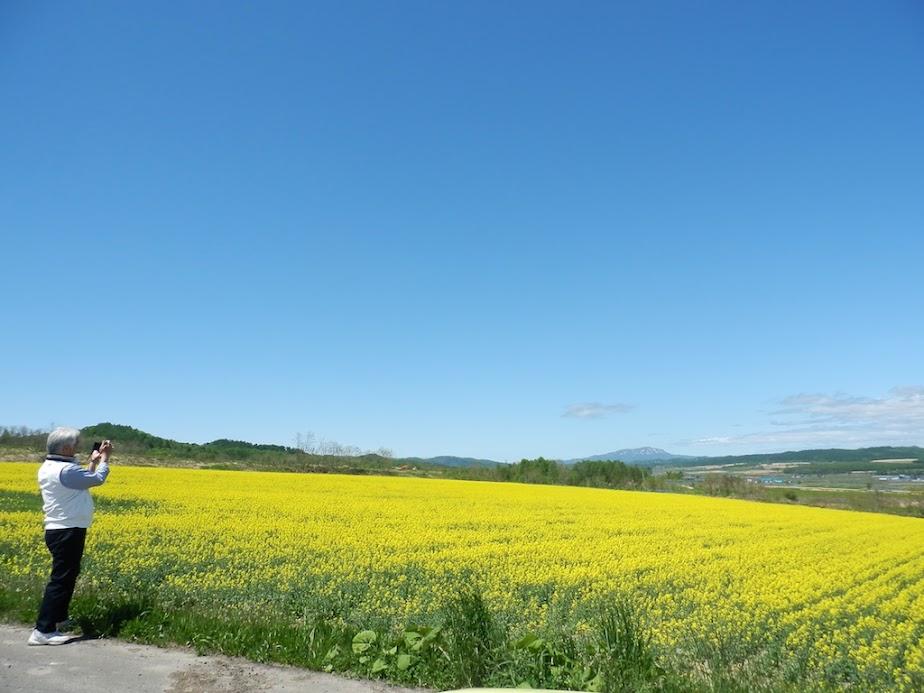 菜の花(北竜町)