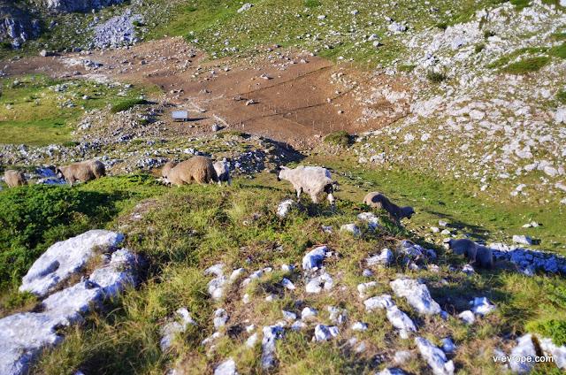 Козы и овечки в Дурмиторе
