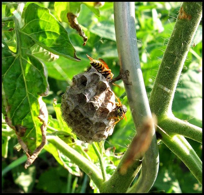 Une coulée verte 13.07.21-abeilles2