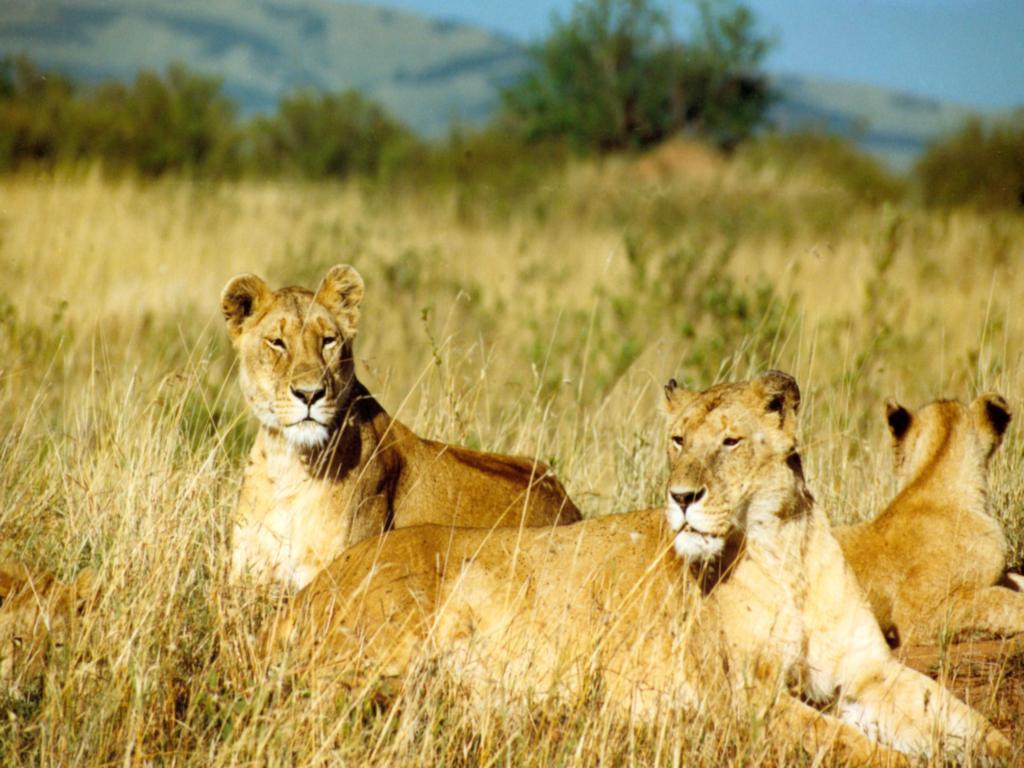 Kumpulan Foto Binatang Buas
