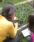 Teacher and student discuss the insect eggs found on the onion plant.