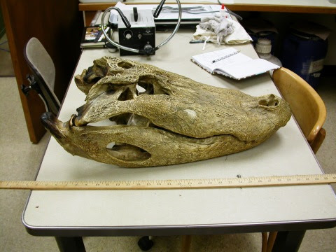 Questões e Fatos sobre Crocodilianos gigantes: Transferência de debate da comunidade Conflitos Selvagens.  - Página 2 Giant-gator-2