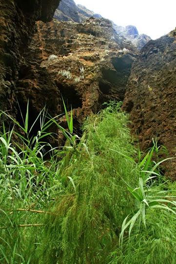 Ecosistema azonal en barranco