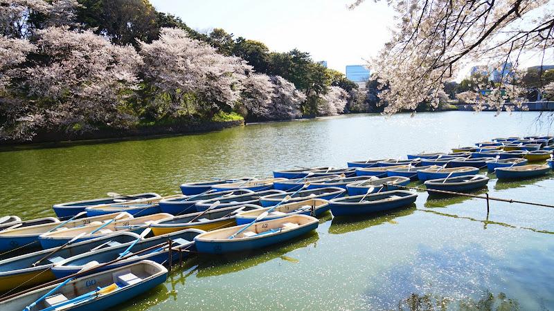 千鳥ヶ淵 桜 写真3