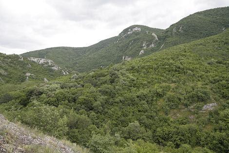 Окрестности Сокобани