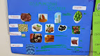 besinler ve vitaminler