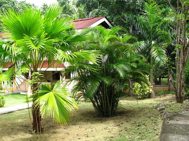 Из зимы в лето. Филиппины 2011 - Страница 3 IMG_0062