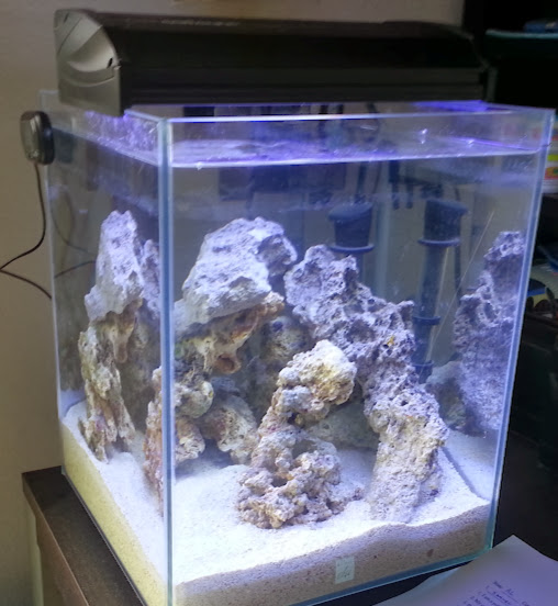 Getting started on a 5g nano reef in a fluval chi for Fluval chi fish tank