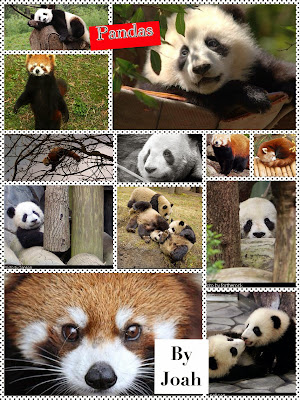 pic collage panda cover