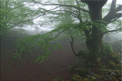 La niebla engalana el bosque