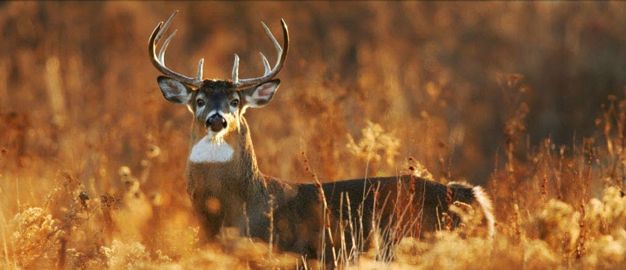 Michigan subsidizes deer for wealthy landowners