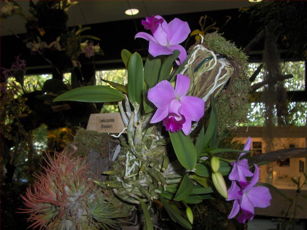 Risultati immagini per orchidee botaniche