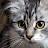 Landree Allen avatar image