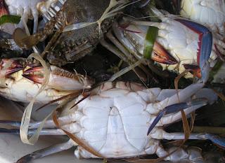 Le nid de crabes comme on les aime