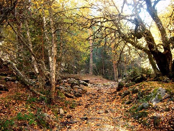 5 puertos de la Sierra de Guadarrama, sábado 11 de octubre 2014 ¿Nos acompañas?