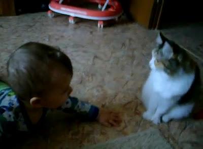 【動画】これは可愛い!赤ちゃん VS 猫 にらみ合いから叩き合い 猫、肉球パンチ