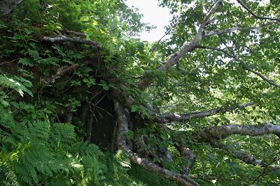 Дерево на склоне
