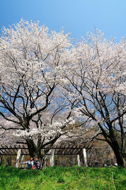 kirsikkaaa
