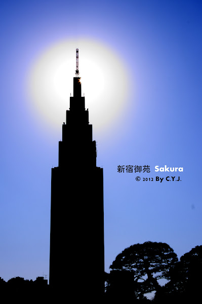 東京賞櫻行