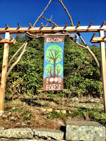 Beacon Food Forest in Seattle, WA - cultivatedrambler.com