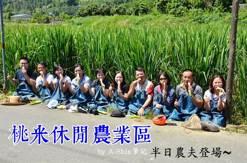 桃米休閒農業區|日頭赤炎炎,決定來當半日農夫體驗採集筊白筍,我在南投埔里桃米休閒農業區。