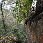 Ferns growing on rock (225664)