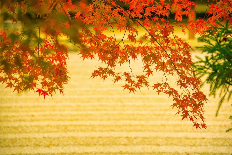 京都 紅葉 仁和寺 写真5
