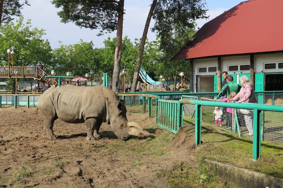 Inmitten des Parks stehen auch zwei Nashörner