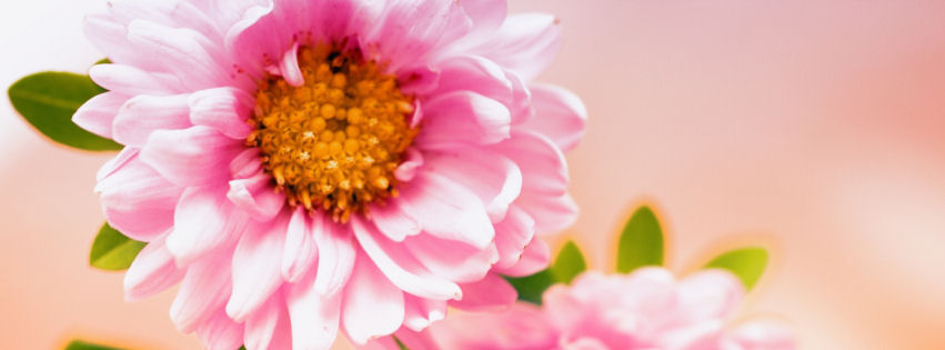 Pink floral facebook cover
