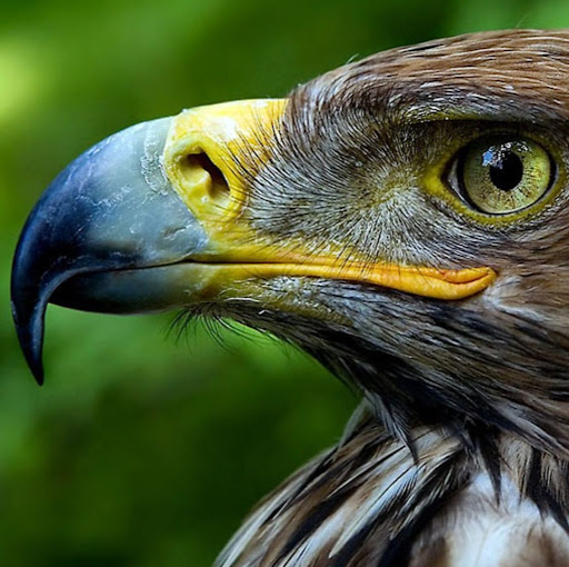 Fighting Falcon picture