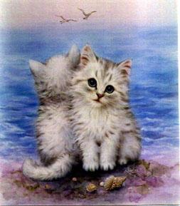 zeecat.jpg