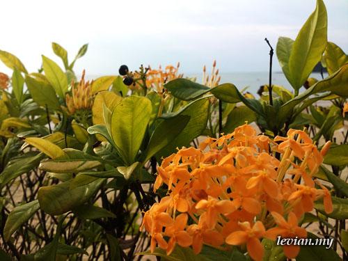 Flower (SE Vivaz)