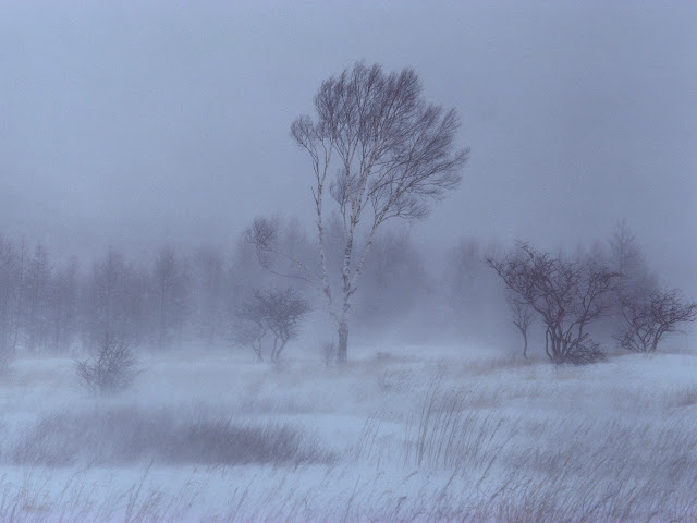 Snow,Amazing Wallpapers