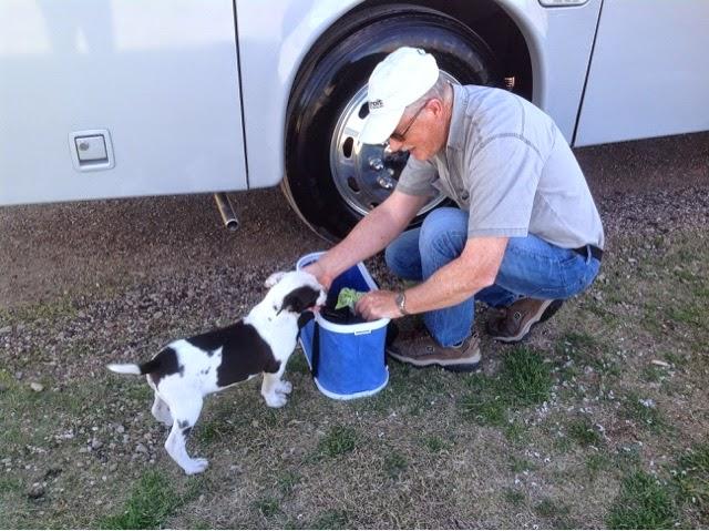 Jeff pets a Pit Bull puppy