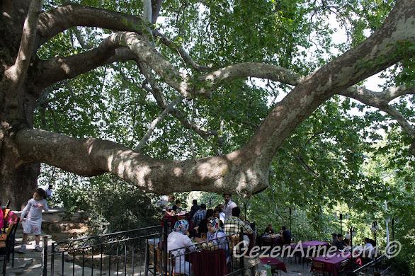 Bursa, Uludağ yolundaki tarihi İnkaya Çınarı'ndaki çay bahçesi