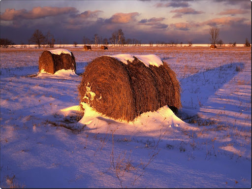 Field of Hay Rolls.jpg